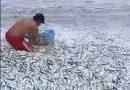 Miles de peces abarrotan playa en Venezuela