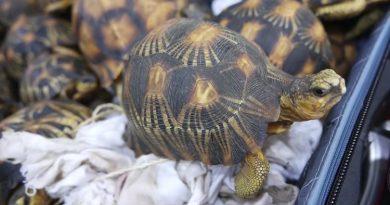 Profepa decomisa 13 mil tortugas en aduana del AICM