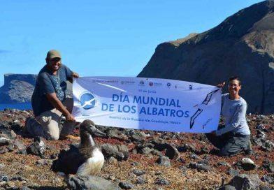 Celebra México Día Mundial de los Albatros